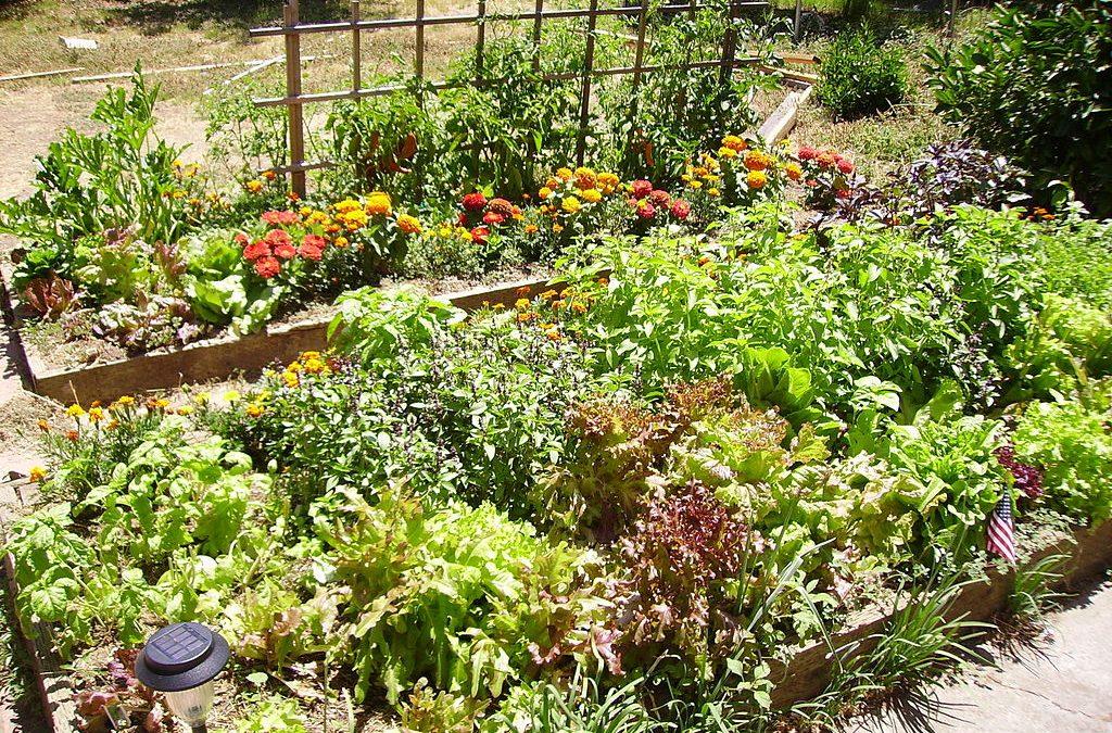 Florida Couple Wins Lawsuit to Plant Garden